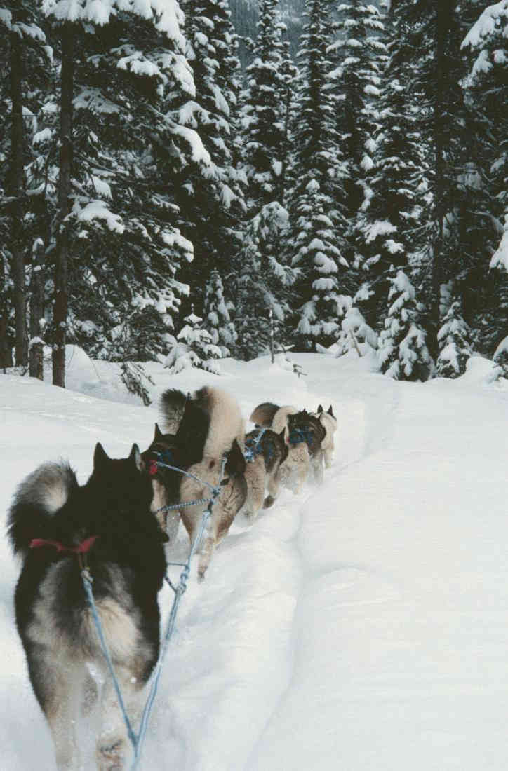 Mushing through a winter forest